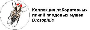 Коллекция лабораторных линий плодовых мушек Drosophila